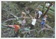 Children with Fallen Trees Series, #3