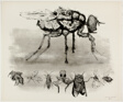 Fly and Smaller Insects, from A Bestiary
