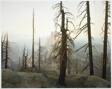 Burnt Forest and Half Dome, Yosemite