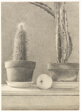 Still Life with Apple and Cacti