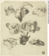 Sketches of Mountain Sheep