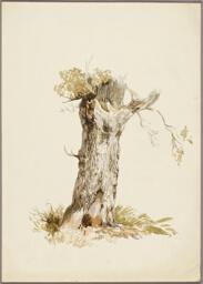 Tree Trunk I