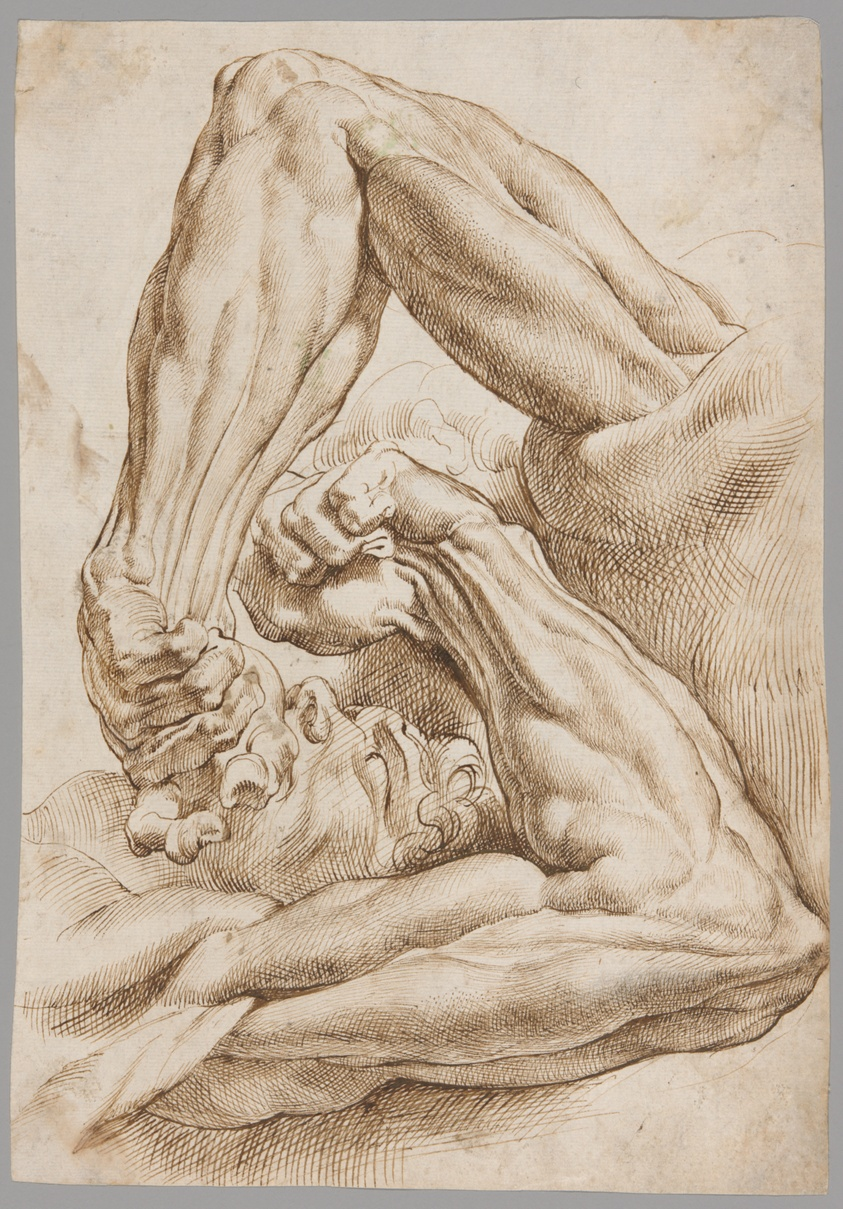 Image result for Peter Paul Rubens. A Sheet of Anatomical Studies, 1600/10. The Art Institute of Chicago, Regenstein Acquisition Fund.