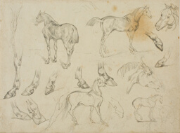 Sketches of a Horse
