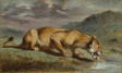 Wounded Lioness