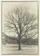 Burr Oak, Lisle, Illinois
