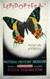 Lepidoptera Moths and Butterflies Natural History Museum