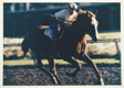 Racehorse: Morning Work - Preparing a Horse in the Morning