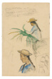 Sketches of Figures, Pandanus Leaf, and Vanilla Plant