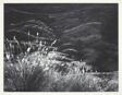 Grass, Arizona