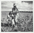 Taking a rest from hoeing cotton, on the Allen Plantation, Natchitoches, Louisiana; An FSA Co-op