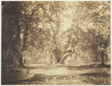 Tree, Forest of Fontainebleau