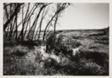 """""""In Media Vita,"""" April Twilights, Virgin Prairie Spring, Webster County, Nebraska"""