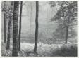 Redding Woods, Connecticut