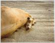 Dead Animals #454, Nevada