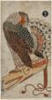 Sparrowhawk (Konori taka)
