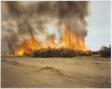 Desert Fire #81