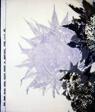 Sunflower (Furnishing Fabric)