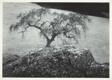 Oak Tree and Rock, Black Hawk Ranch, California