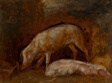 Study of Pigs