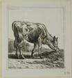 Calf Feeding, from Die Zweite Thierfolge
