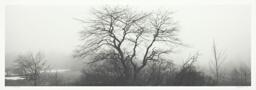Trees and Fog, Rockport, Maine