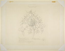 System of Architectural Ornament, Plate 15, Values of the Multiple Leaf