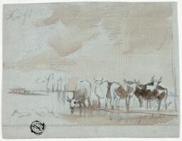Cattle in Water