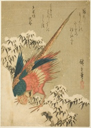A Golden Pheasant amid Snow-Covered Bamboo on a Steep Hillside