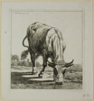 Cow Drinking, from Die Zweite Thierfolge