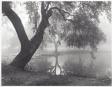 Live Oak and Pond