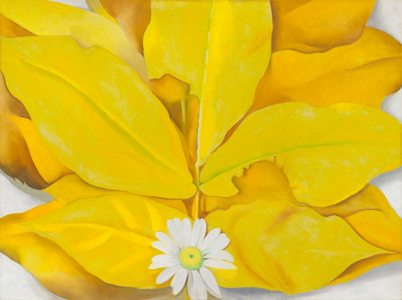 Yellow hickory leaves with daisy the art institute of chicago yellow hickory leaves with daisy mightylinksfo