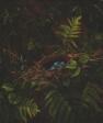 Bird's Nest and Ferns