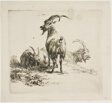 Two Goats with Large Horns, from Various Animals