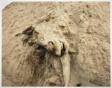 Dead Animals #327, Nevada