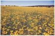 Hill Country, Texas, June 1972, L.B.J. Ranch