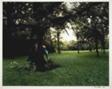 In Saint Paul's Woods