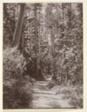 Landscape, Forest Trail