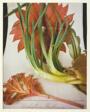 Epiphyllum & Onion