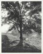 Back-Lit Tree