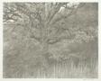Oak Tree, New Jersey