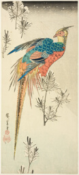A Golden Pheasant Perched on a Steep Snowy Hillside amid Small Pine Saplings