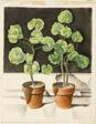 Geraniums, Pots, Spaces