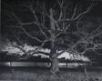 Giant Oak, Max Meadows