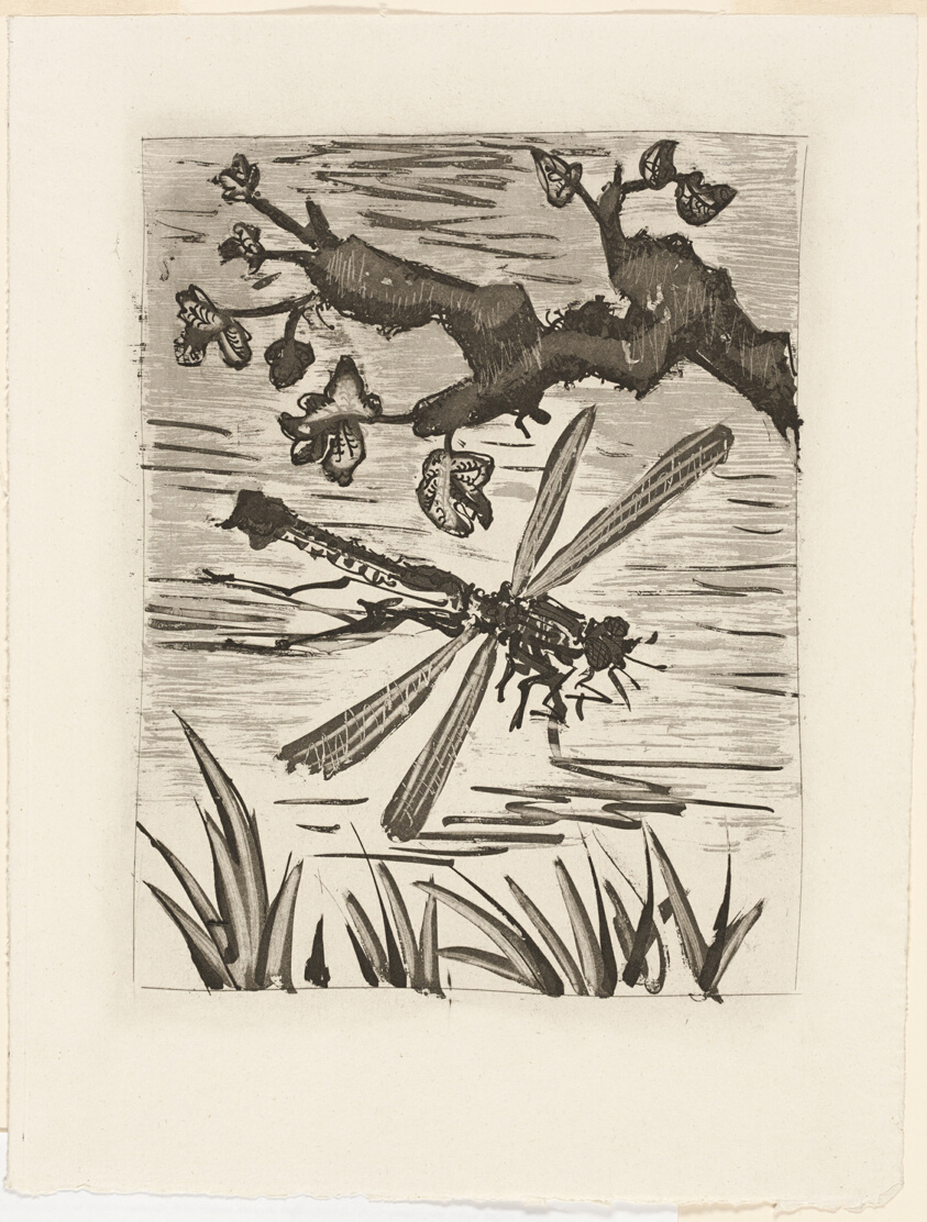 The Dragonfly, from Histoire naturelle | The Art Institute of Chicago
