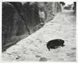 Sleeping Dog, La Coste, Provence, France