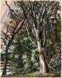 Tree Study Unfinished, Georgia