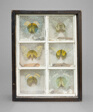 Untitled (Butterfly Habitat)