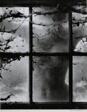 Nude in Cobweb Window