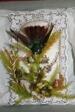 Hummingbird Valentine